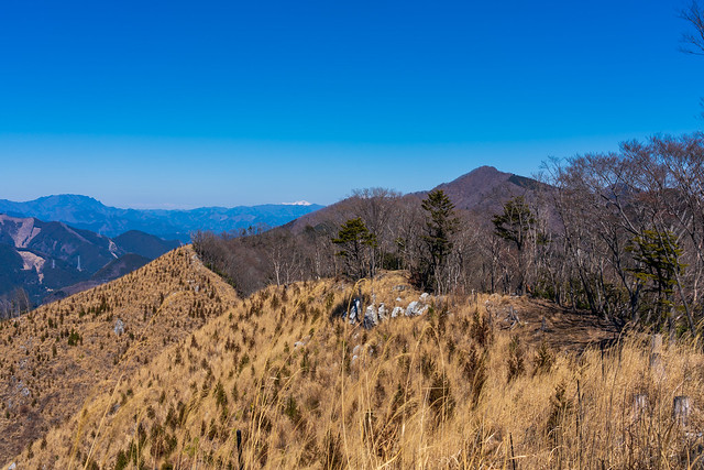 両神山、浅間山、大持山を眺めながら歩む@伐採された稜線