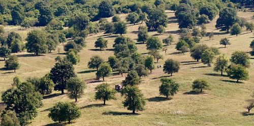 rumänien bäume trees landscape bistritanasaud
