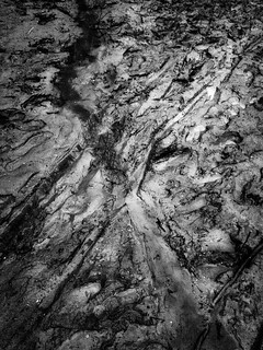 Tracks in the Mud, Stevens Creek Reservoir | by Crowbard!