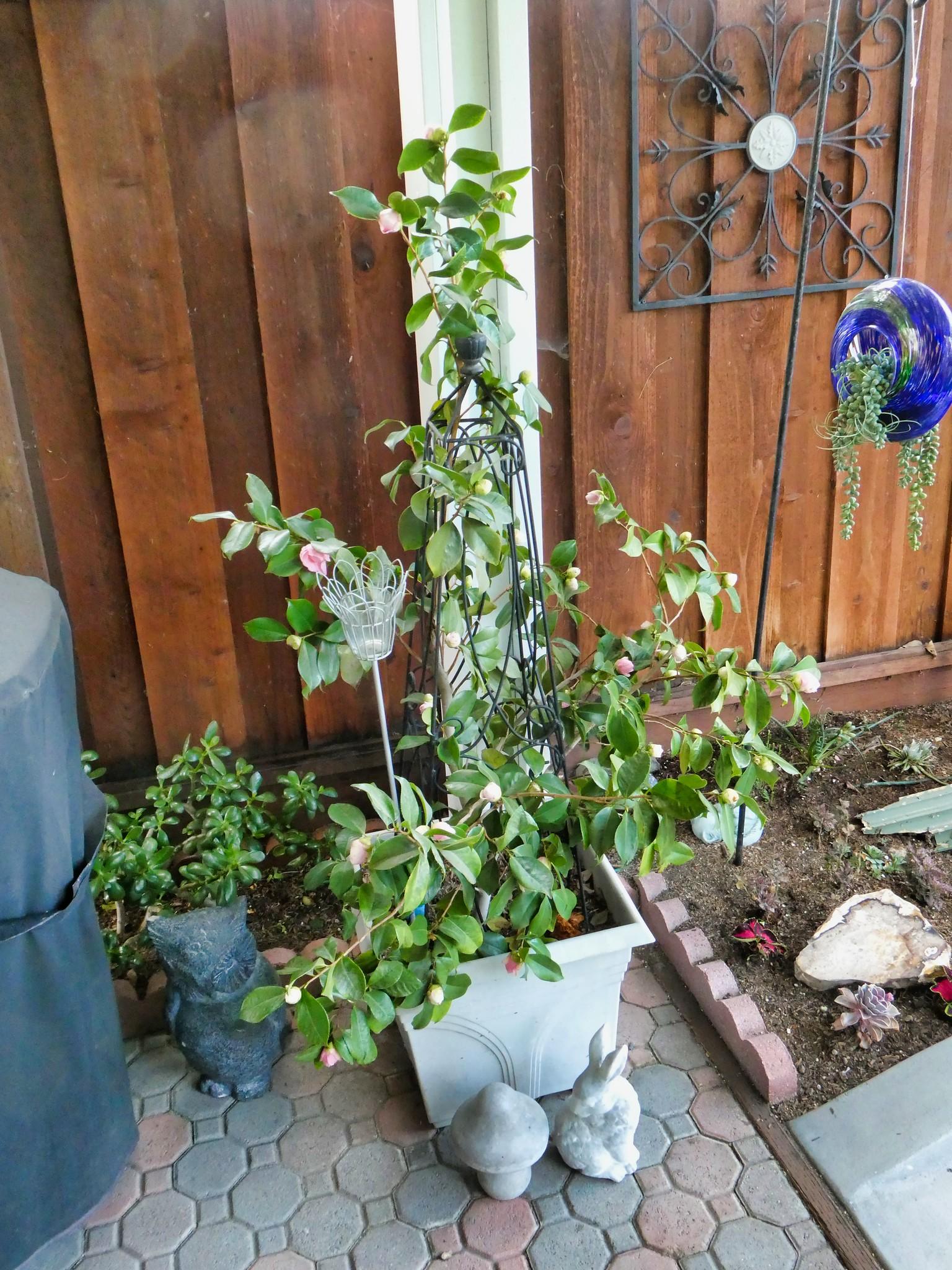 2019-04-02 - Landscape Photography - Garden - Flowers & Decorations