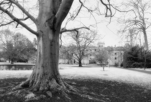 explored farmleigh offshoot ir photoshop mono nik coloreffects
