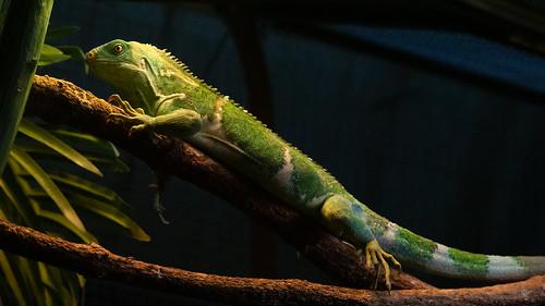 salamander | by beautiful.betty18