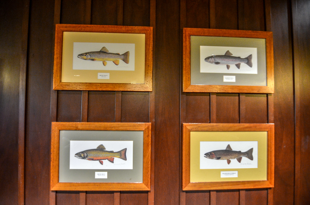 Fish photos Roaring Fork
