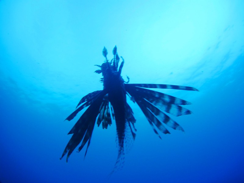 G-July 11th 2012 La Boca Diving Pedro 2626