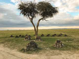 Ol Pejeta Rhino Cemetery & Memorial, Remembering Sudan (the last male northern white rhino) One Year On