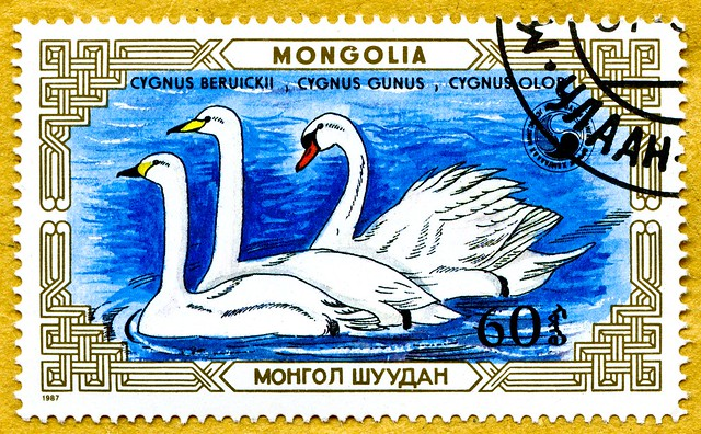 great stamp Mongolia Монгол Улс 60M  swans, Schwäne, Cygnini, Cygnus, Labudovima, Labódi, 天鹅 Zwergschwan (Cygnus bewickii), Cygnus gunus, Höckerschwan (Cygnus olor) francobolli poste timbre Mongolie 蒙古 邮票  почто́вая ма́рка Монго́лия 60M
