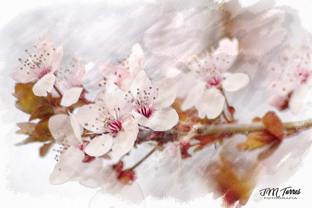 El esplendor de la Primavera