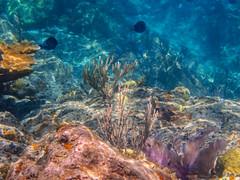 DCL March 2019 Tortola Underwater-206.jpg