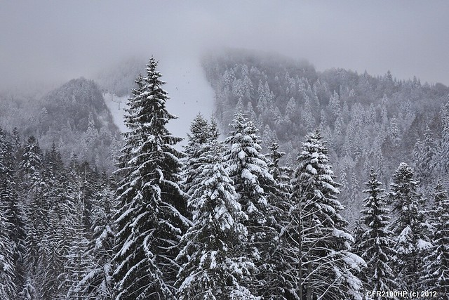 Tree / forest winter
