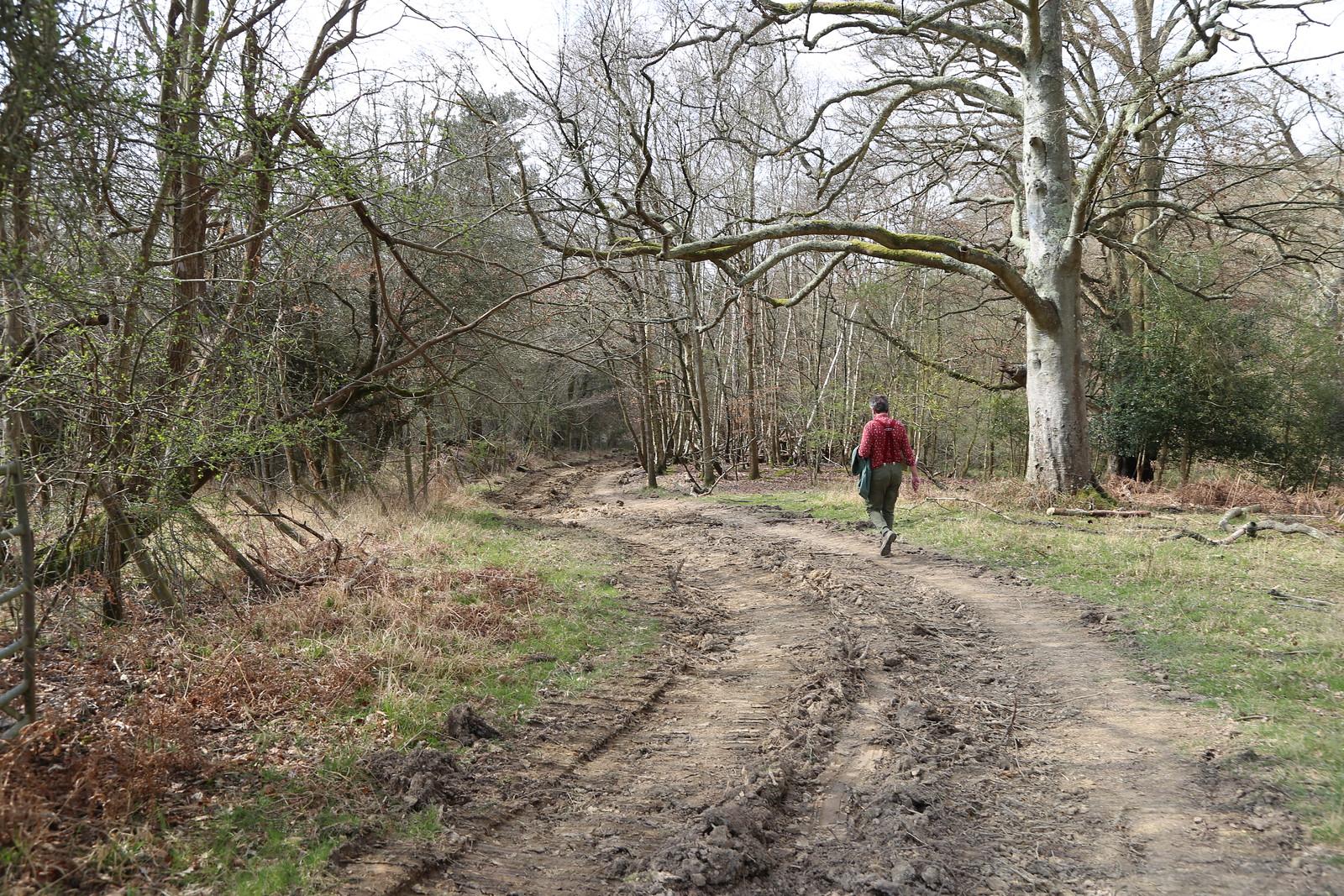 Walk on the edge of twisty track near Eridge