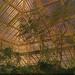 Kew Gardens - Dramatic