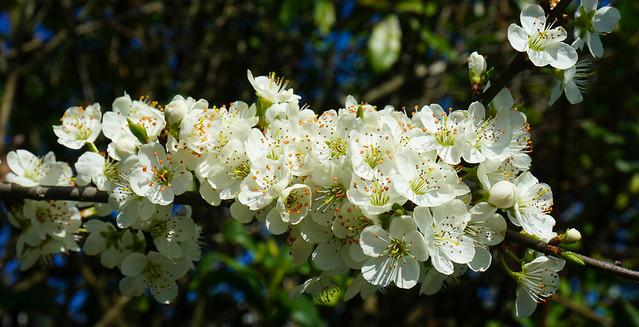 Blossom 2 (Macro)