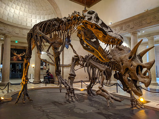 Natural History Museum of Los Angeles County | by RuggyBearLA