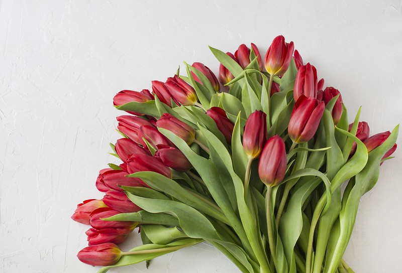 Обои цветы, букет, тюльпаны, красные, red, flowers, beautiful, romantic, tulips картинки на рабочий стол, раздел цветы - скачать