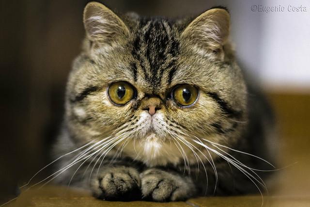 Miu, la mia gattina / Miu, my cat