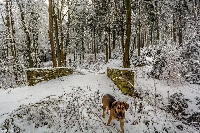 Hera im Winterwald