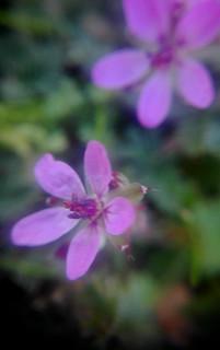 Flores   by ciudad imaginaria