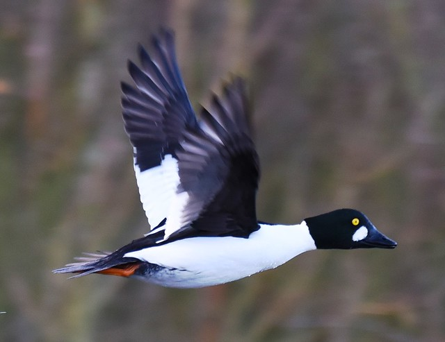 Goldeneye (M) In Flight 010119