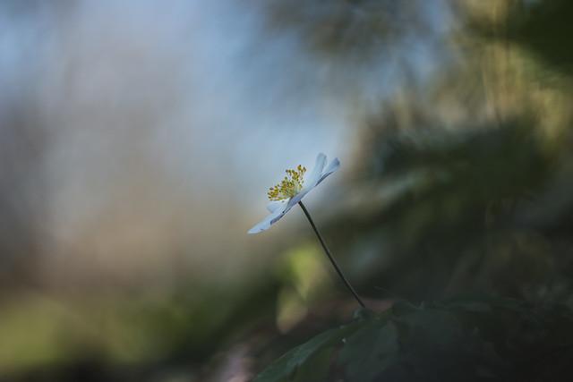 Spring Aspirant