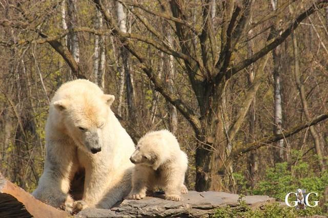 Besuch Tierpark Friedrichsfelde 06.04.201961