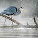 Great Blue Heron In the Mist by Michael R Hayes