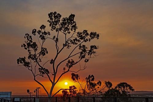 demark ipswich tree silhouette sunset cloud 7d 2470
