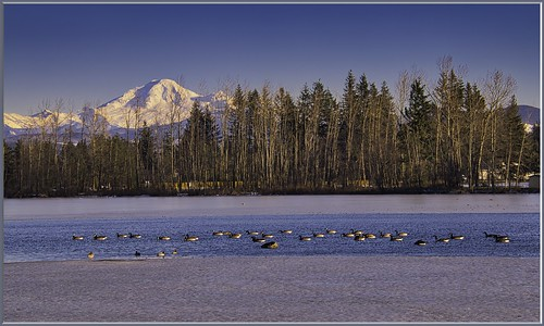 landscape abbotsford mtbaker mountbaker baker milllake water ice canadageese cacklinggeese trees bluesky