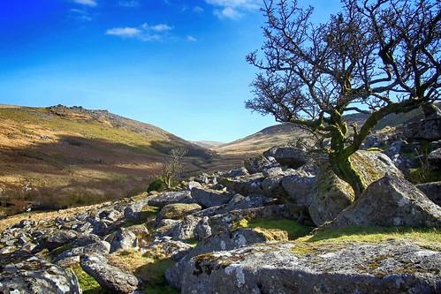 dartmoor shelstonetor westokementrivervalley valley westokement tree boulder boulders moor moorland rural remote wild wilderness countryside nature natural outside outdoor devon bluesky blacktor