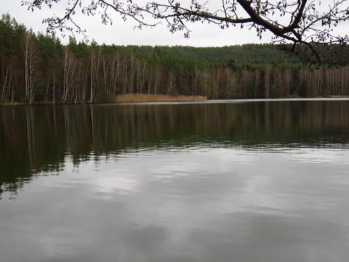outdoor nature landscape landschaft thuringia thüringen germany germancute deutschland tree teich pond baum wald forest plant see