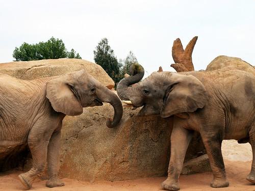 Elephants | by Paradise & Wilderness