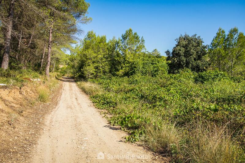 Camino del Fondo d'en Geló a la Rasa de Cal Veguera