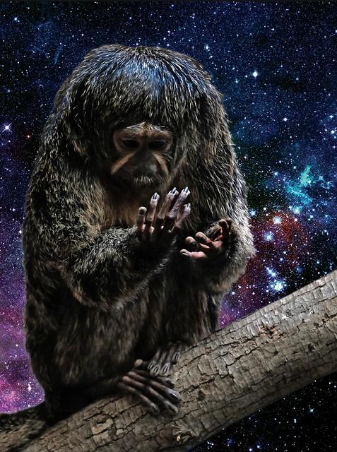 Next Level Space Monkey