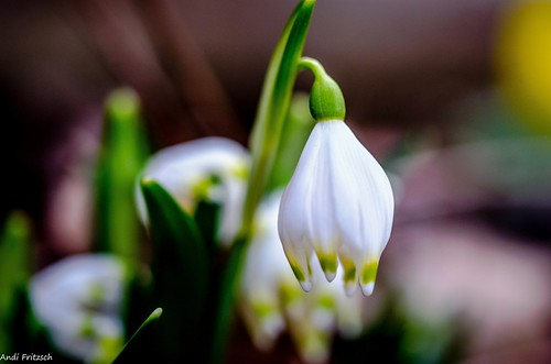 Frühling/ Spring | by Andi Fritzsch