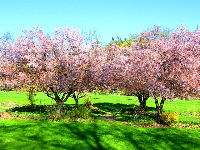 Green and Pink Spring