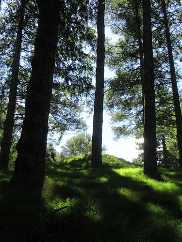 outdoor garden arboretum eastwoodhill tree grass cloud ngatapa gisborne newzealand