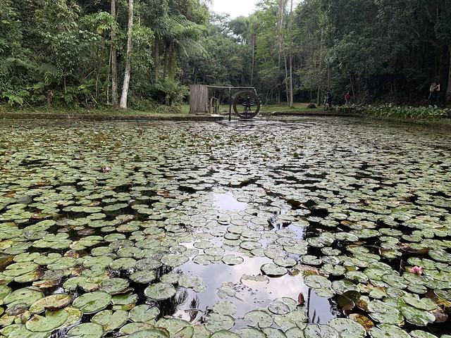 A Water Wheel, the Lake of the Ipiranga Creek Springs, the Botanical Garden of São Paulo, Brazil.