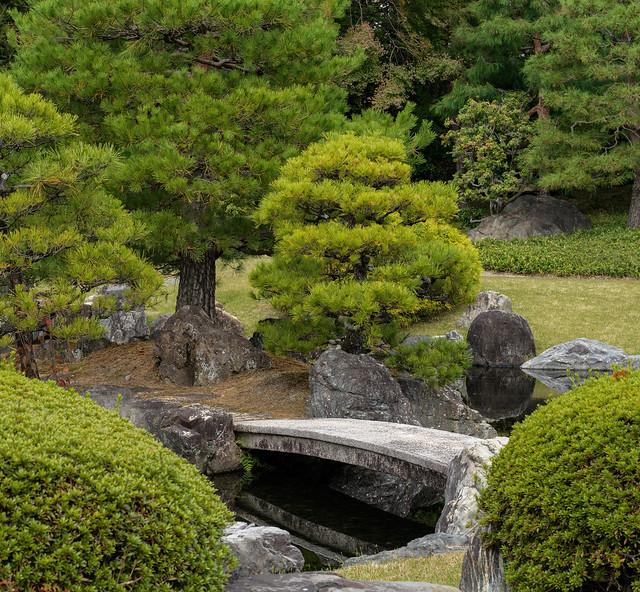 Bridge among the pines