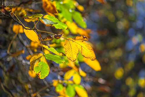Colourful Leaves | by fs999