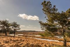 Landschap Hijkerveld Drenthe