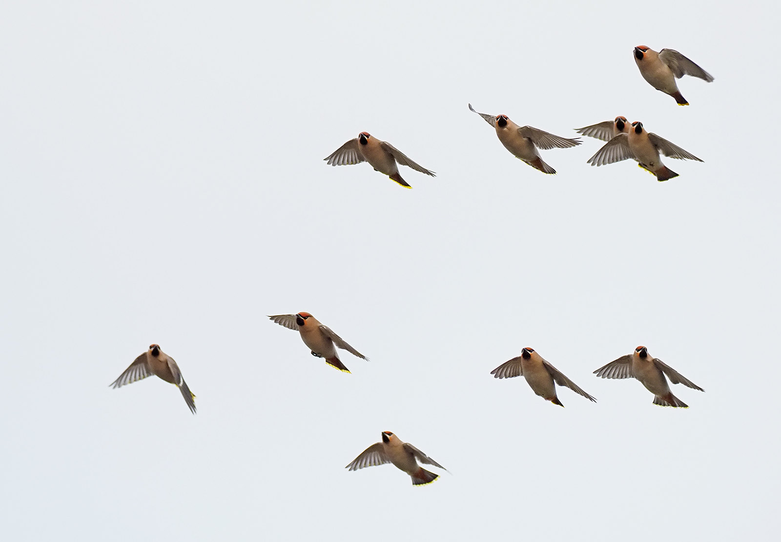 Waxwing - bomber command...wheeling round