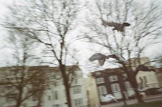 Pigeons | by Jamie Kitson