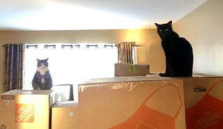 Cats and moving boxes | by brownpau