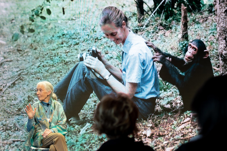 A photo of Jane Goodall standing in front of a projection of a photo of herself back when she was doing her research. In the projected image, she is young and sitting in a forest with a monkey that is scratching her back.