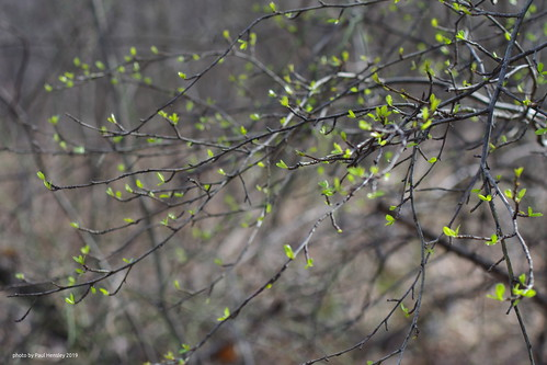 signs of Spring | by pvh photo