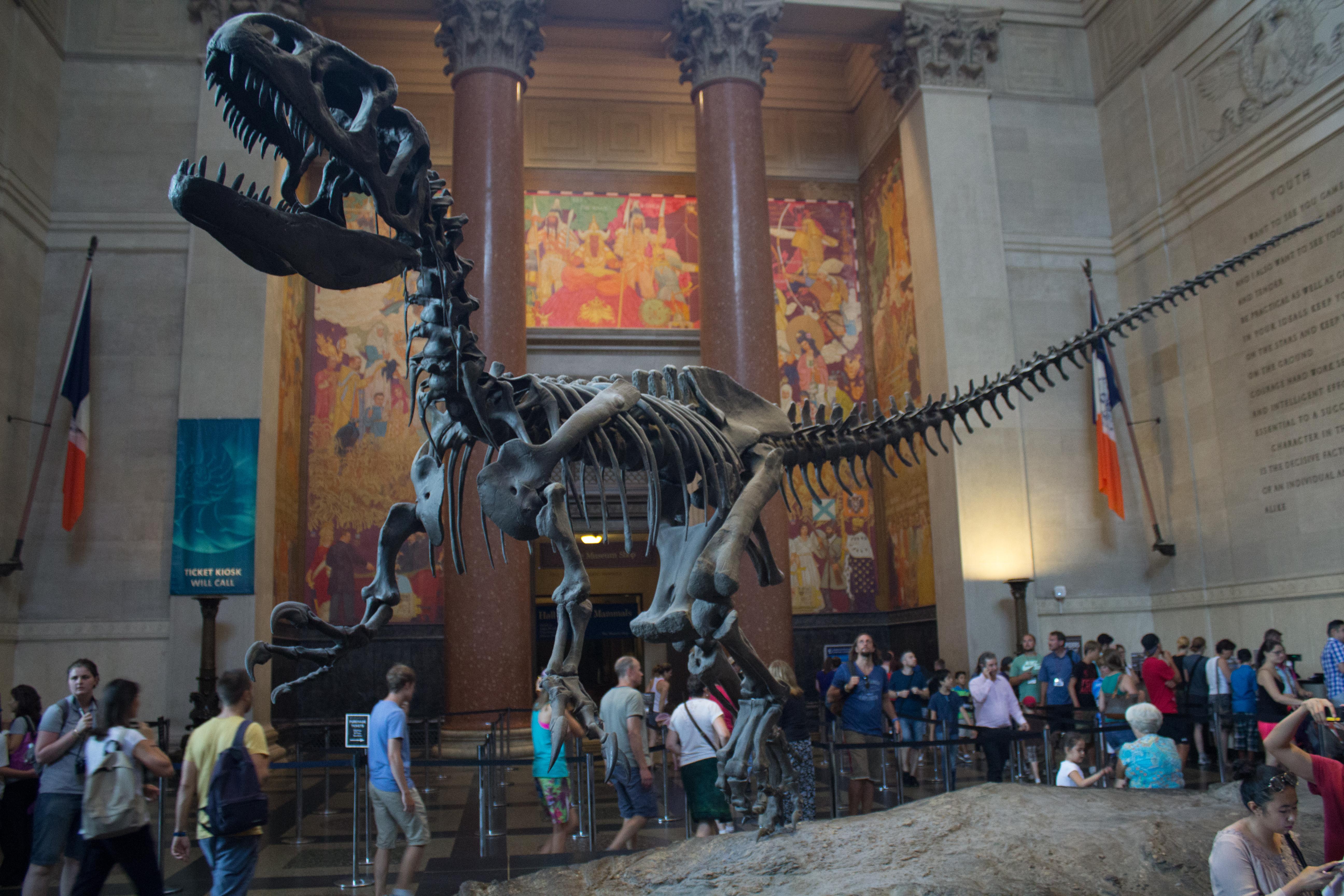NY Museo Ciencias Naturales 52