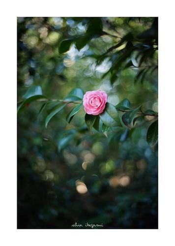 2019/2/23 - 5/21 photo by shin ikegami. - SONY ILCE‑7M2 / Voigtlander NOKTON CLASSIC 40mm f1.4 SC VM | by shin ikegami