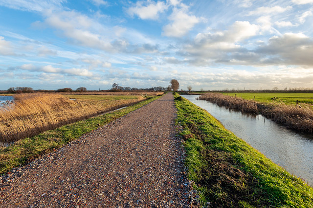 Country road in Dutch polder
