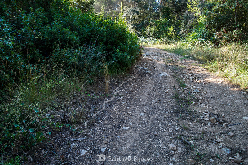 Camino de hormigas a la orilla de un camino