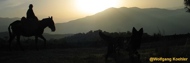 Photographer had to watch a dog. Caballero in  a mountainous area at dawn.