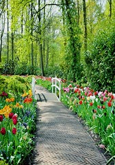 Landschaft - Parkweg ums�mt mit Tulpen